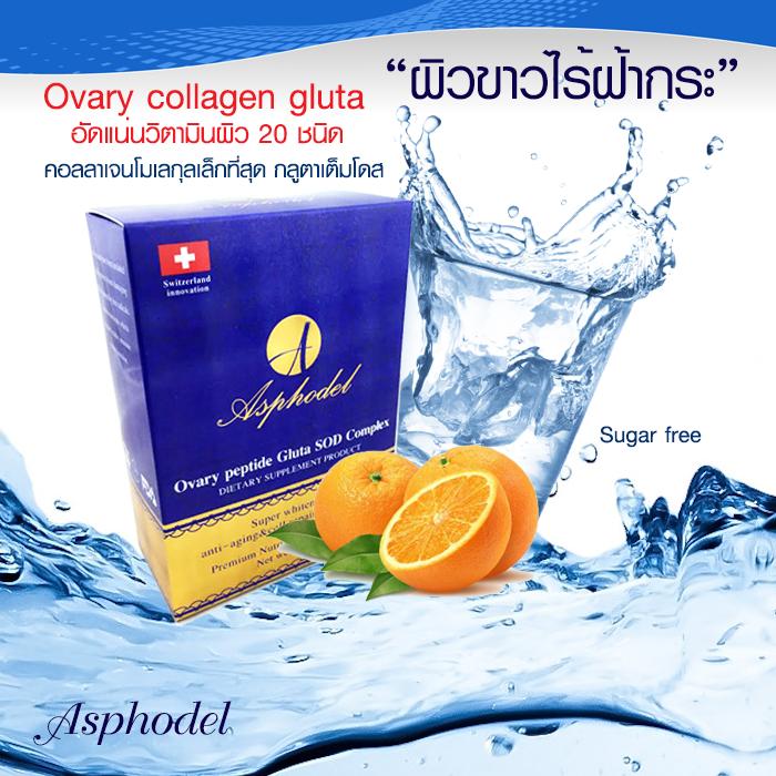aphoda ovary gluta drink อโฟด้า asphodel