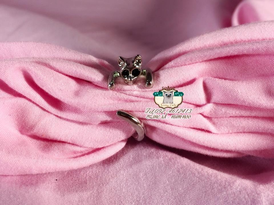 แหวน ตัวแมว