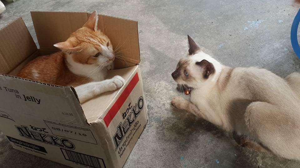 เหมียวฟูฟูเพ็ทช็อป ของกินของใช้หมาแมว ทรายแมว วิตามินหมาแมว