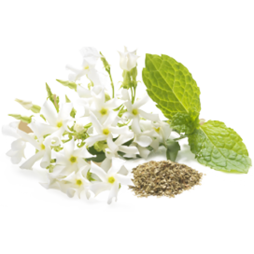 White Jasmine Mint fragrance 100ml. : 002879