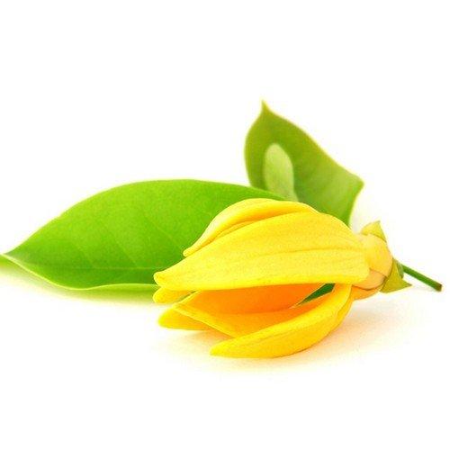 หัวน้ำหอมกลิ่นดอกกระดังงา : 002449
